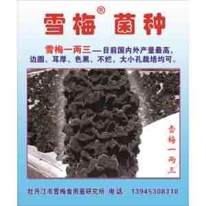 黑木耳品种雪梅1两3