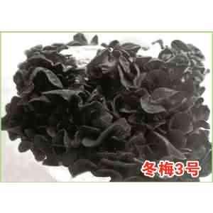 黑木耳菌种冬梅3号